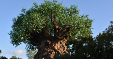 Animal Kingdom Arvore da Vida Tree of Life