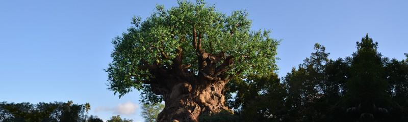 Animal Kingdom Arvore da Vida Tree of Life